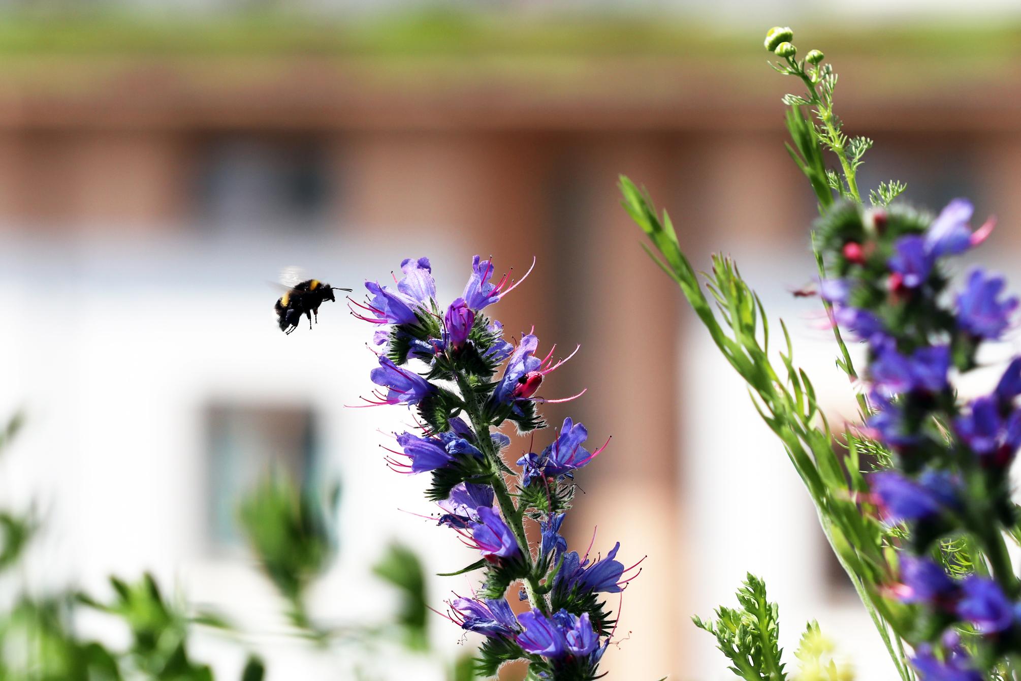 Naturgarten Intensiv 2019: Biodiversität. Eine Veranstaltung von Reinhard Witt in Kooperation mit dem Naturgarten e.V. und der Bildungsstätte Gartenbau
