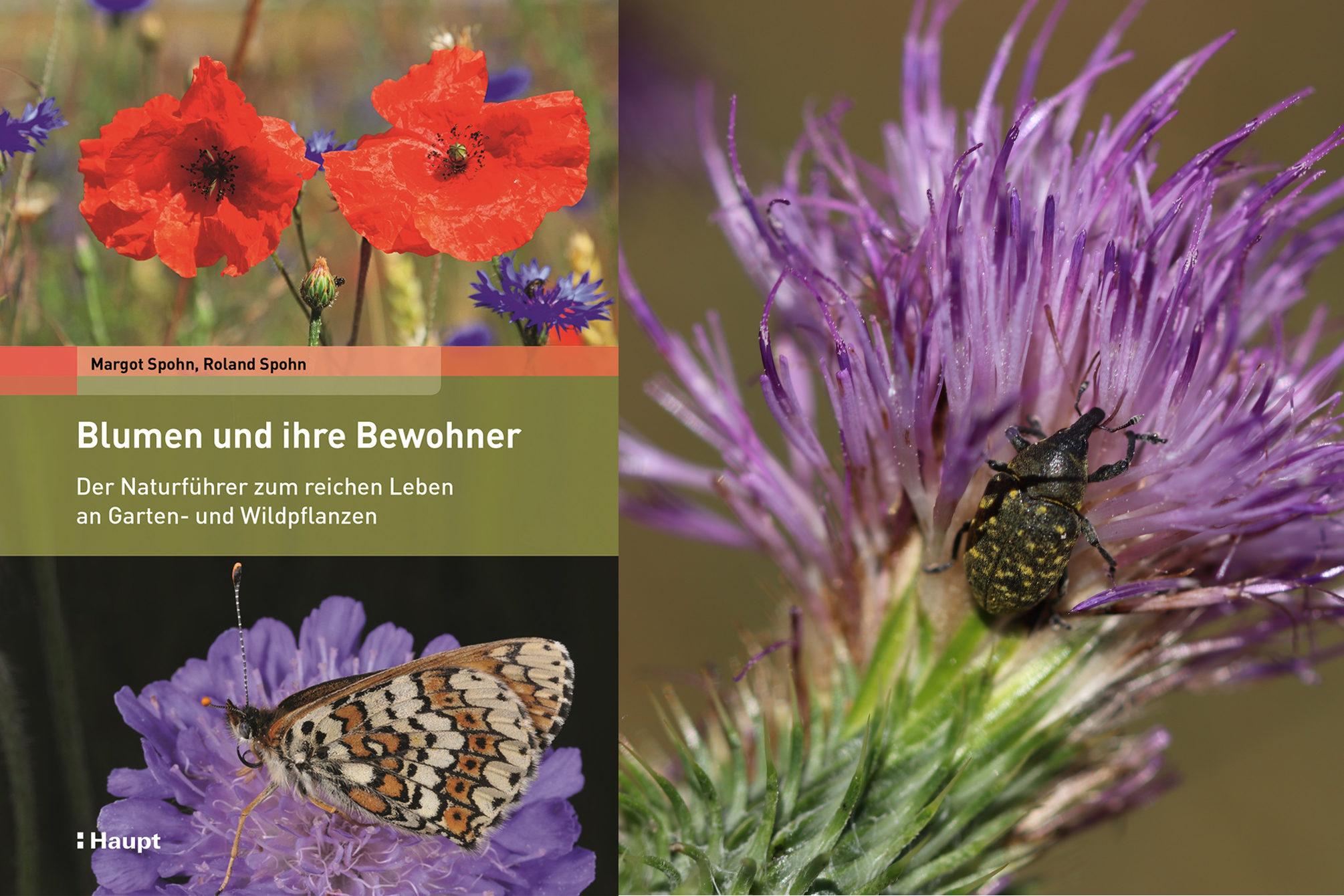 Spohn und Spohn: Blumen und ihre Bewohner, Rezension von Katharina Heuberger